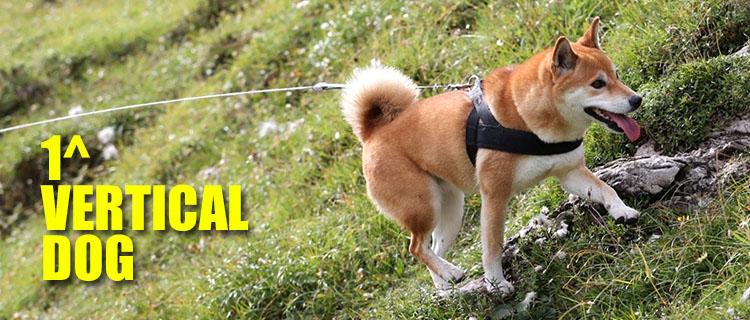 BANNER-VERTICA-DOG